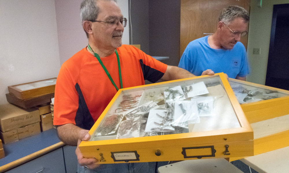 Chuck Harp moving box of specimens