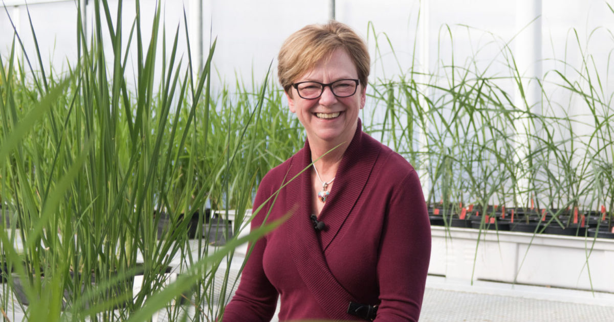 Jan Leach with rice plants