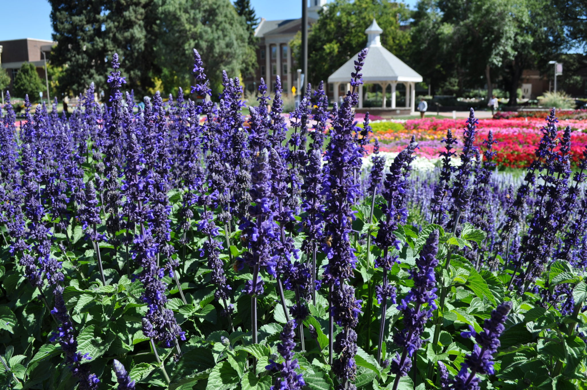Annual Flower Trial Garden reveals this year's winners