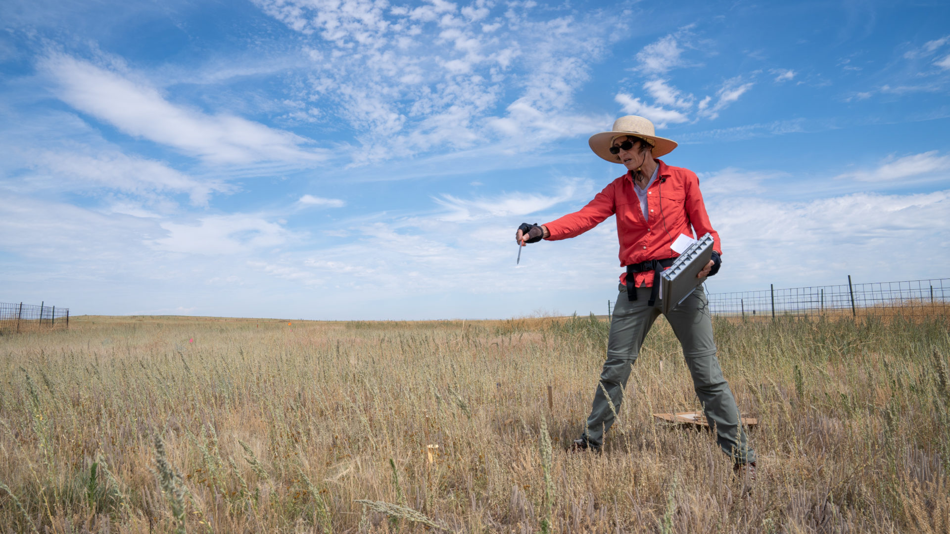 Researcher Cynthia Brown and grassland plot