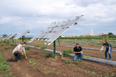 researchers with solar panels in crop field