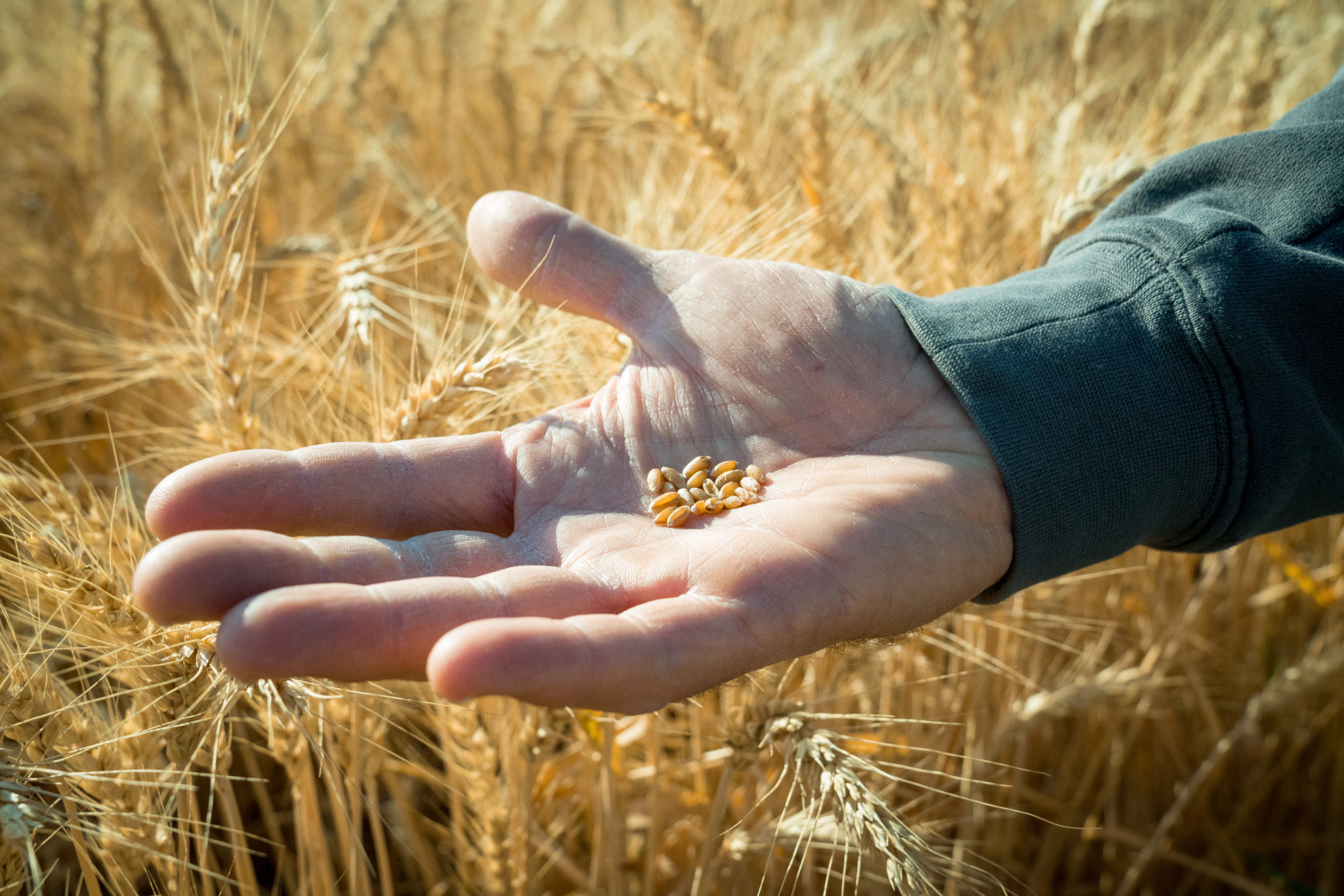 CSU secures $750,000 grant to develop plant breeding training materials 4