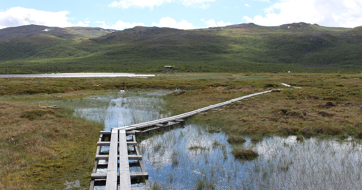 thawing permafrost turning to marshland